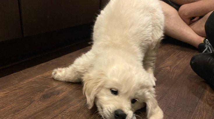 Putt Putt Pup