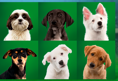 Puppy Bowl XI: Team Ruff vs. Team Fluff