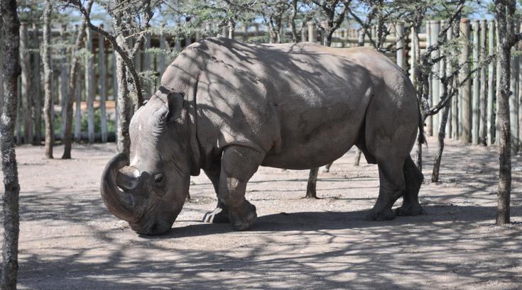 041615_rhino