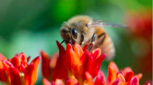 042115_bees