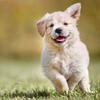 05715_puppy