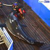 Mary Lee, a great white shark