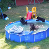 Bear pool party