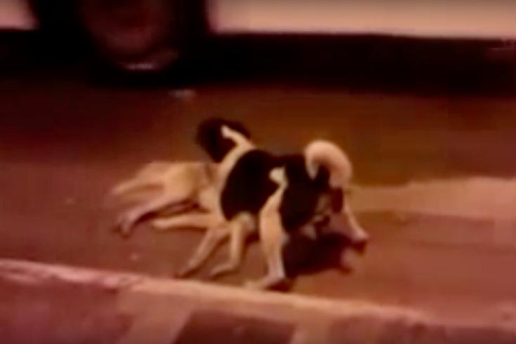 Dog killed by car