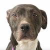 ACCT animal adoption campaign