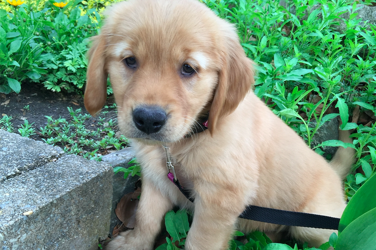 Hickey Puppy