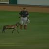 08262016_Sheep_Baseball_Field
