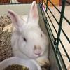 Patty the Rabbit