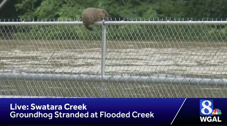 groundhog stranded