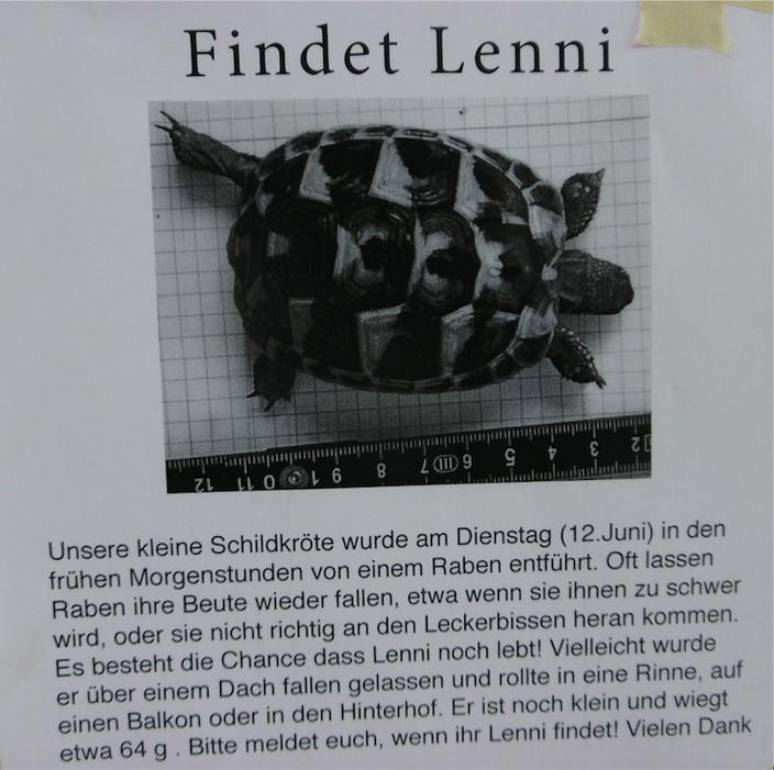 Berlin Turtle