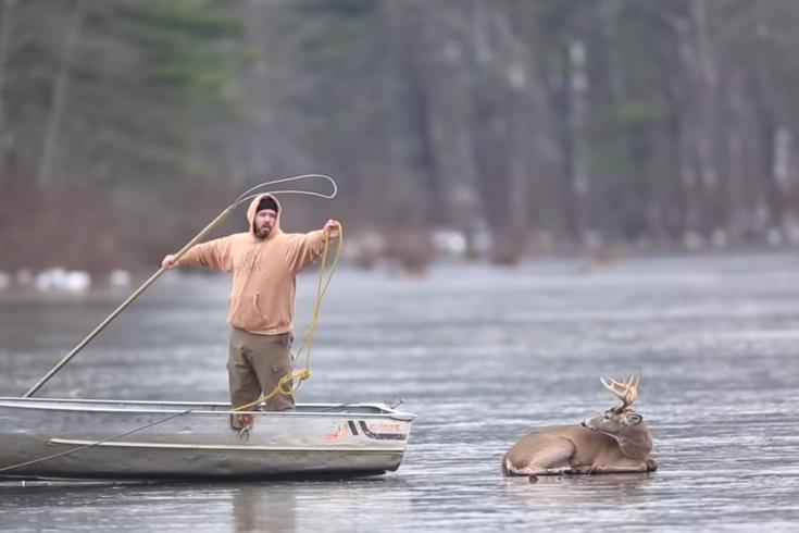 Pa. deer rescue