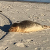 Seal Marine Jersey Shore