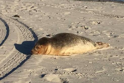 Seal Marine Jersey Shore