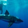 071115_Sharks