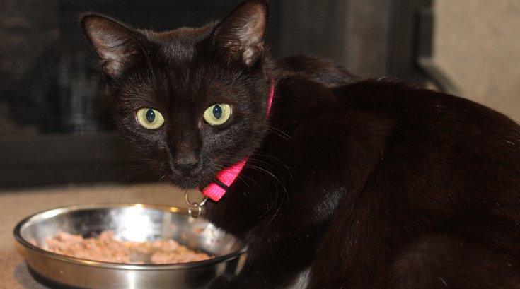 Pet of the Week: Billie Jean