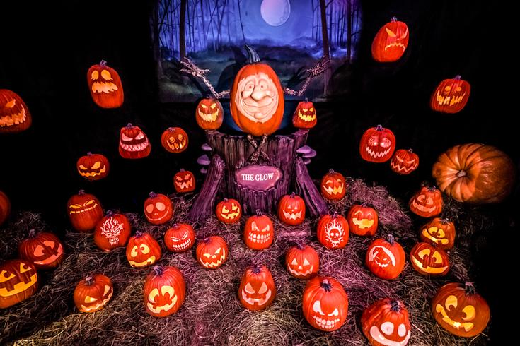 pumpkins at The Glow
