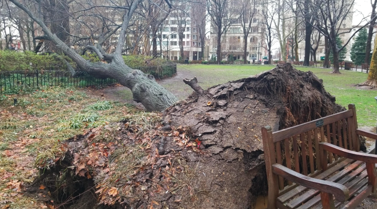 Fallen Tree Rittenhouse