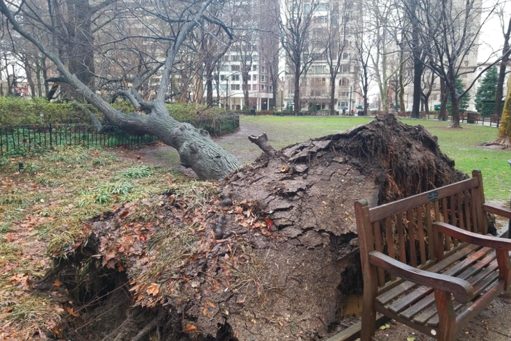 Fallen Tree Rittenhouse