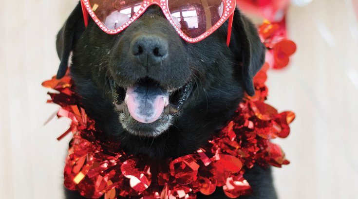 Valentine's Day cards from PSPCA