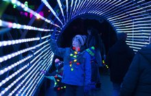Limited - Elmwood Park Zoo Wild Lights