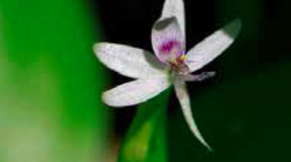 Wildflower Philly Species