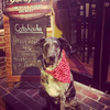 Catahoula Philly's Yappy Hour