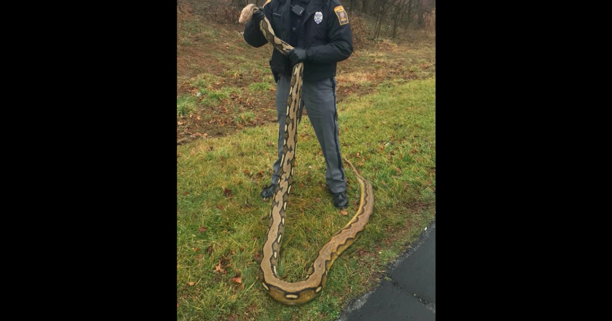 'Strange' 15-foot python found dead by police in York County - EpicNews