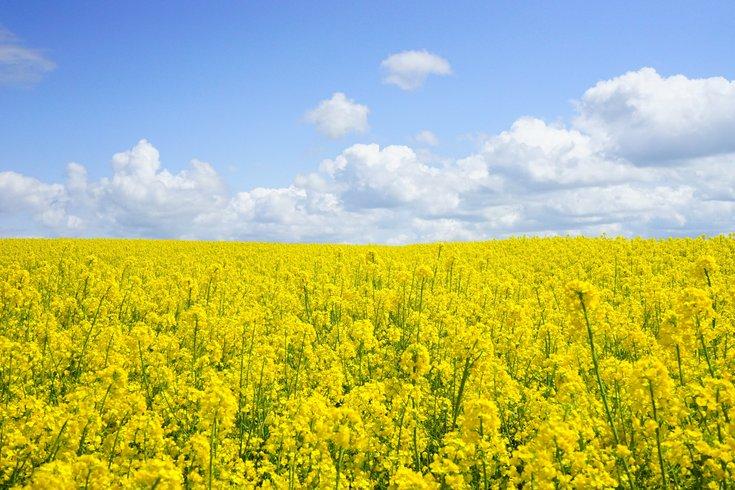 Pollen in Spring