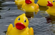 Limited - Rubber Duck Race AWE
