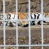 Animaland Zoological Park