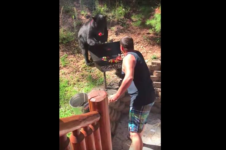 BEAR WATCH BBQ BABY