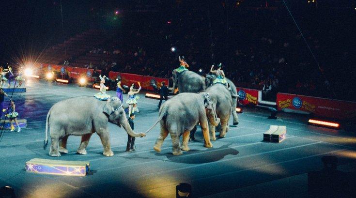 Circus elephant ban