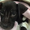 Benny puppy