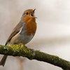 Bird in spinach
