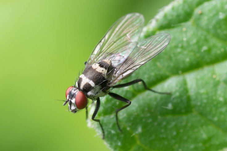 How To Get Rid Of Gnats In Your Home Phillyvoice
