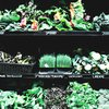 An Assortment of Greens at Grocery Store