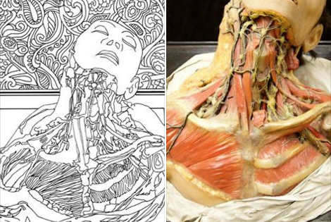 Mutter Museum coloring book