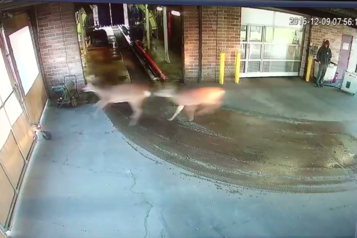 Deer Car Wash