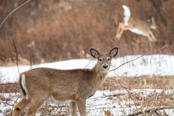 deer game commission