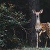 Hunters TB Deer