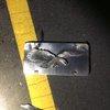 bristol borough plate hit and run