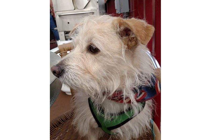 Eddy the Dog stockton montco rescue