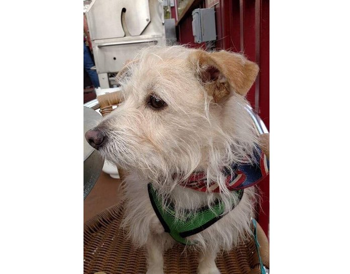 new arrival fa347 bdda1 Montco family's dog found in Stockton, New Jersey, after ...