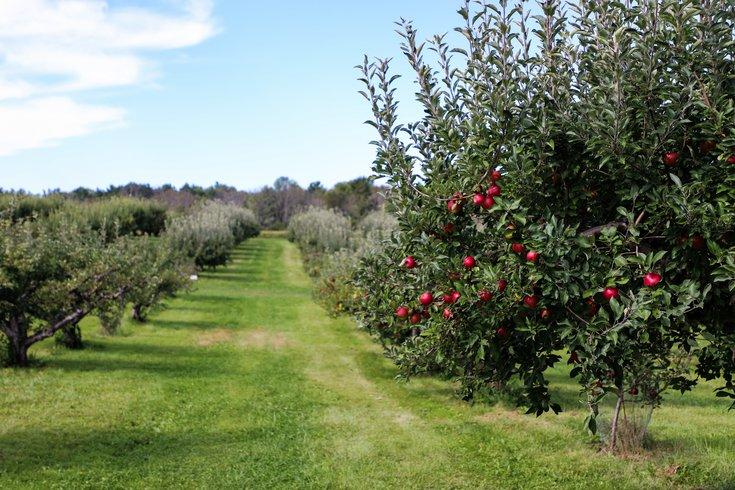 Food fruit vegetables environment study