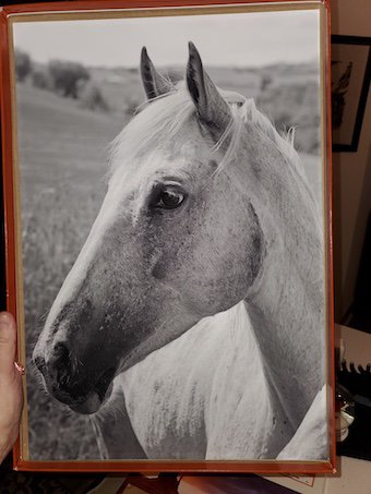 george ross horse photo
