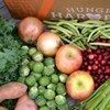 Limited - Hungry Harvest April2021v2