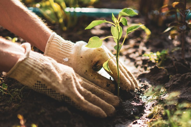 Farmer hands take care and protect young sprout plant