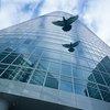 Bird flying between skyscrapers