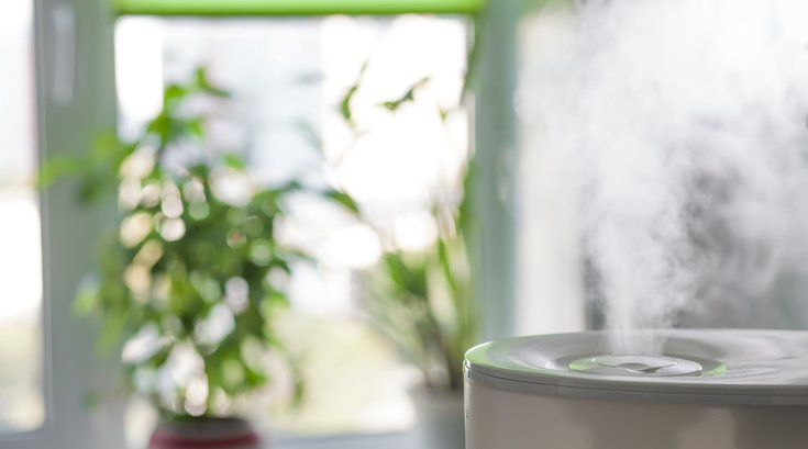 Air purifier and plant
