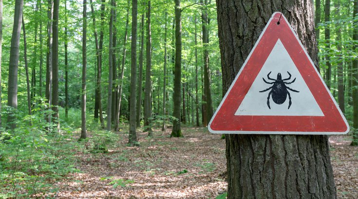 Tick warning at the entrance to wooded area
